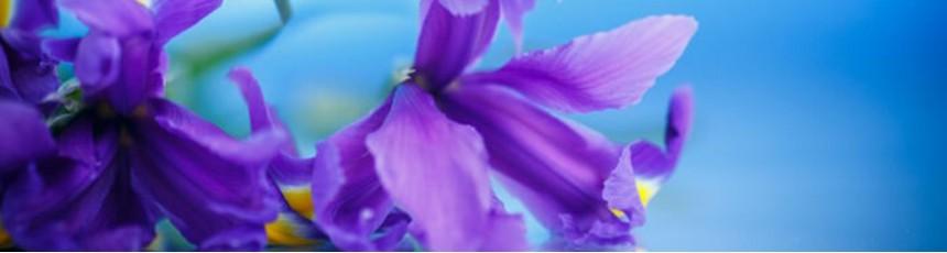Irisi, buchete iris si aranjamente florale din iris.