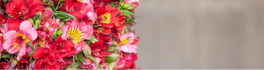 Alstroemeria, buchete alstromeria si aranjamente florale din alstromeria.