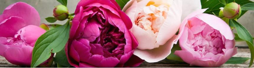 Buchete de vara si aranjamente cu flori de vara cu livrare in Constanta