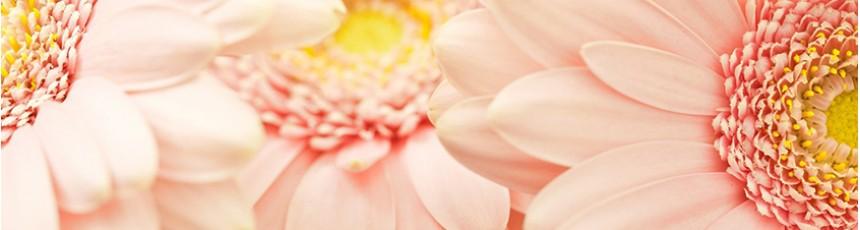 Gerbera, buchete gerbera si aranjamente florale din gerbera cu livrare in Judetul Constanta.