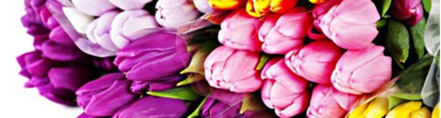 Lalele, buchete lalele si aranjamente florale din lalele cu livrare in Judetul Constanta