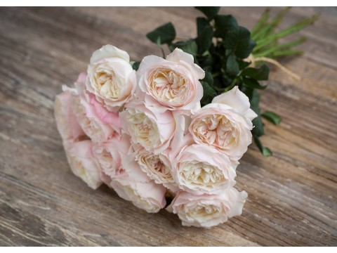 David Austin Wedding Rose Keira
